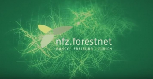 Retrace the NFZ.forestnet history in videos !