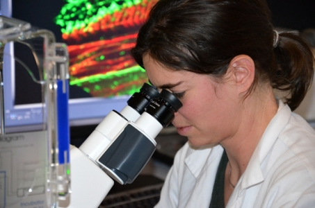 Young scientist contract offered by INRA within the doctoral school RP2E